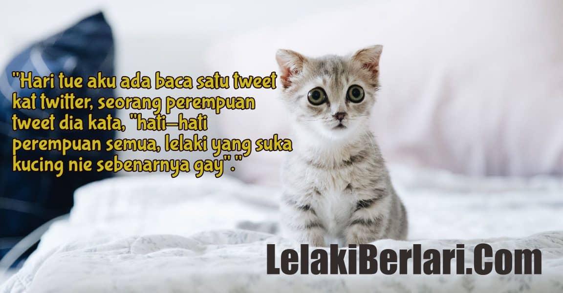 Diari 187 : Pencinta Kucing